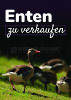 Enten zu verkaufen Werbebanner | Poster kaufen