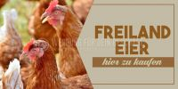 2:1 | Freiland Eier Plakat | Werbeposter | 2 zu 1 Format