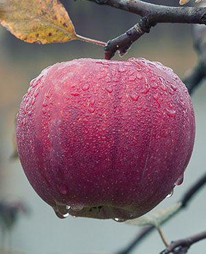 Äpfel sind auch beliebte Produkte auf einem Hofladen