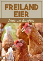 Freiland Eier Plakat | Werbeposter