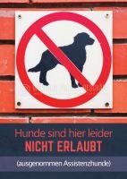 Hunde sind hier leider nicht erlaubt Hinweis | Poster