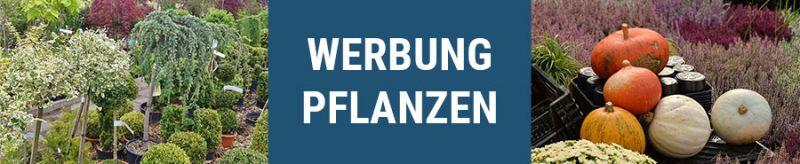 media/image/banner-pflanzen.jpg
