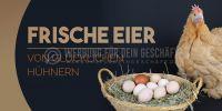 2:1 | Frische Eier Werbeschild | Poster | 2 zu 1 Format