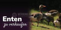 2:1 | Enten zu verkaufen Werbebanner | Poster kaufen | 2 zu 1 Format