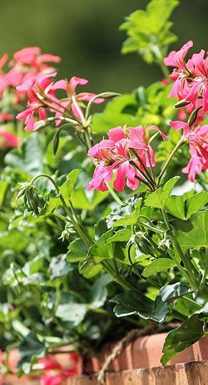 Eine Aktion zum Blumen Pflanzen bringt Aufmerksamkeit