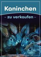 Kaninchen zu verkaufen Werbeposter | Plakat online drucken