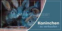 2:1 | Kaninchen zu verkaufen Werbeposter | Plakat online drucken | 2 zu 1 Format