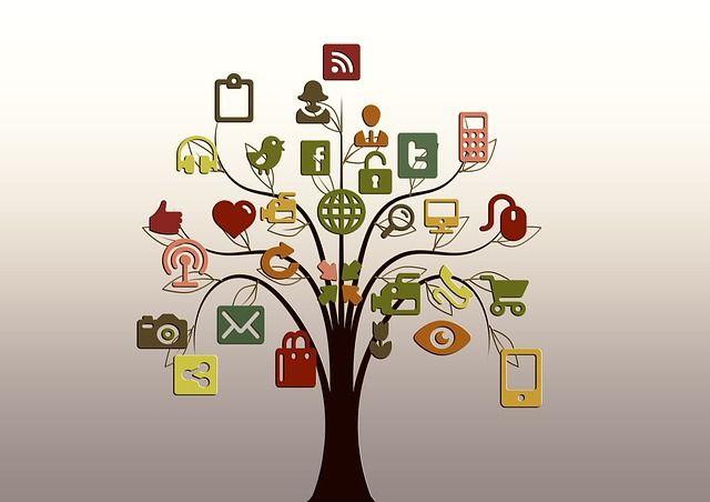 media/image/tree-200795_640.jpg