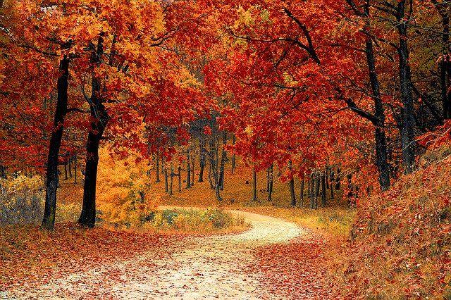 Die idealen Saisonartikel für die Herbstsaison